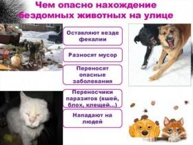 Памятки для населения чем опасно нахождение бездомных животных на улице